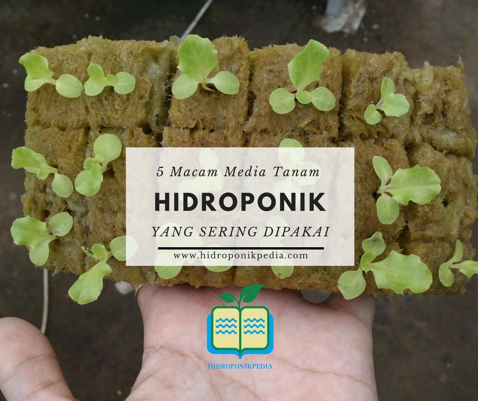 5-macam-media-tanam-hidroponik