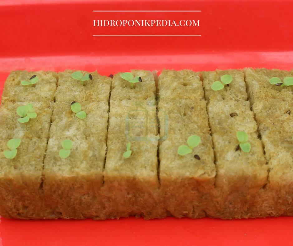 cara-menanam-selada-hidroponik-08