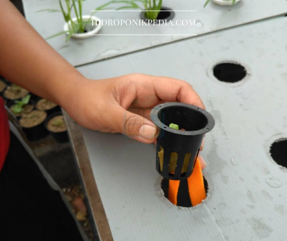 cara-menanam-selada-hidroponik-12