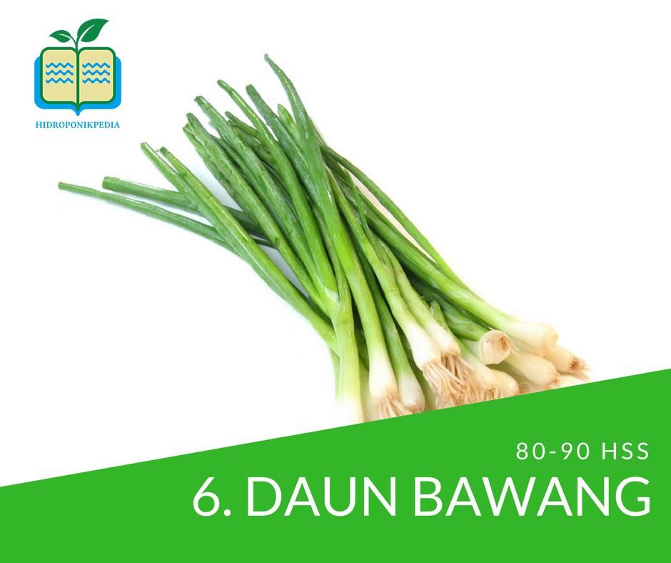 masa-panen-sayuran-hidroponik-daun-bawang