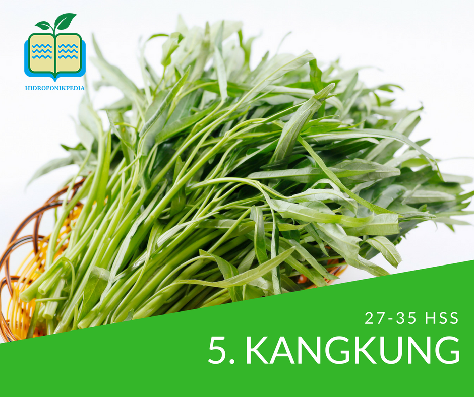 masa-panen-sayuran-hidroponik-kangkung