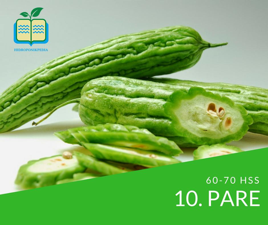 masa-panen-sayuran-hidroponik-pare