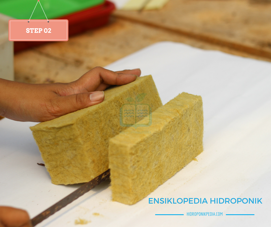 step-by-step-cara-menanam-kangkung-hidroponik-02