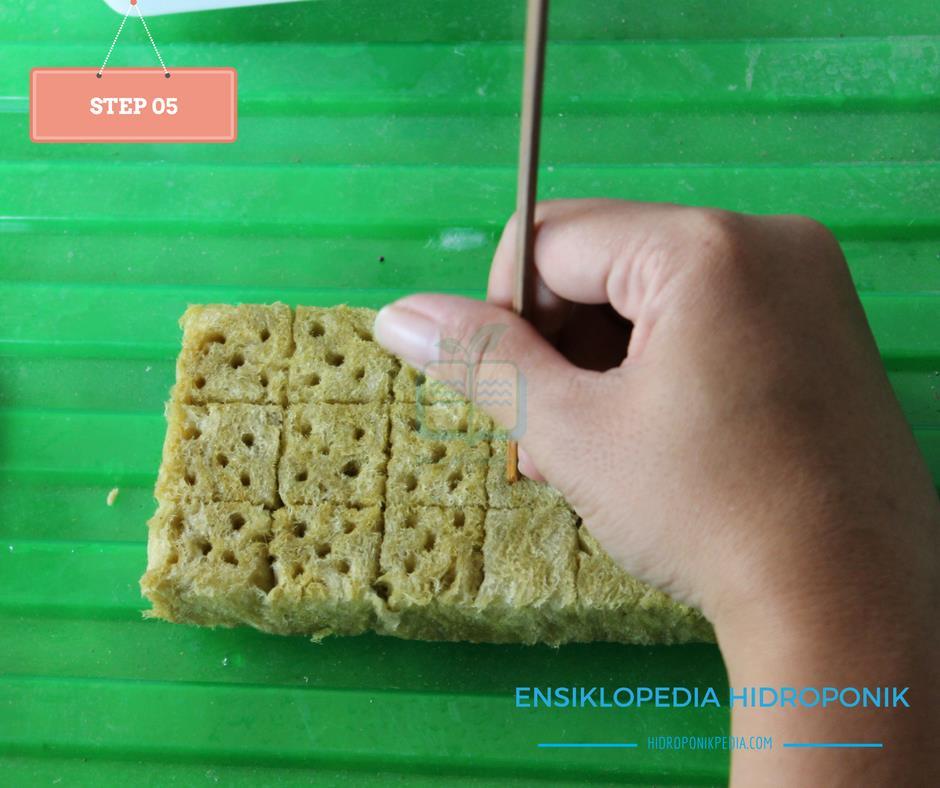 step-by-step-cara-menanam-kangkung-hidroponik-05