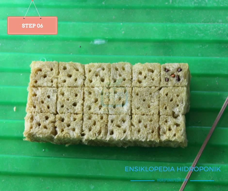 step-by-step-cara-menanam-kangkung-hidroponik-06