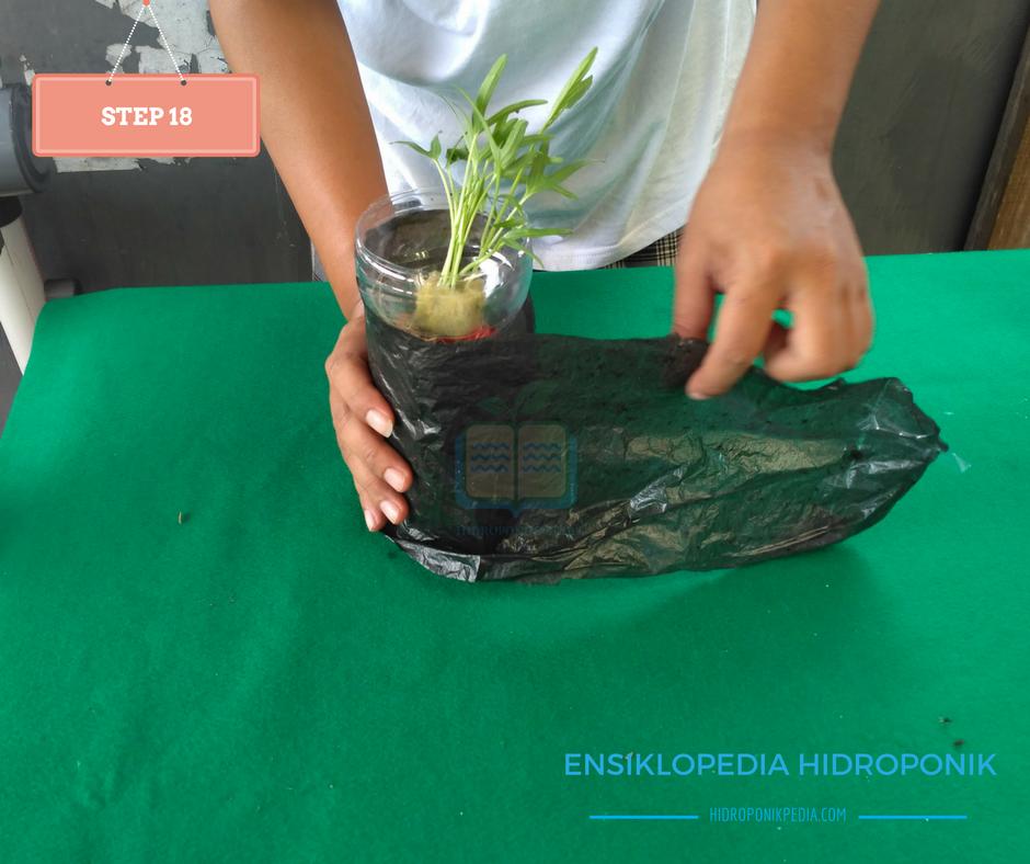 step-by-step-cara-menanam-kangkung-hidroponik-18