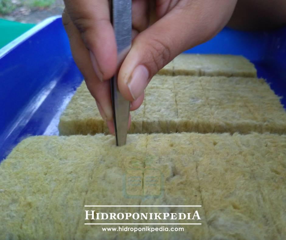 cara-menanam-caisim-hidroponik-03