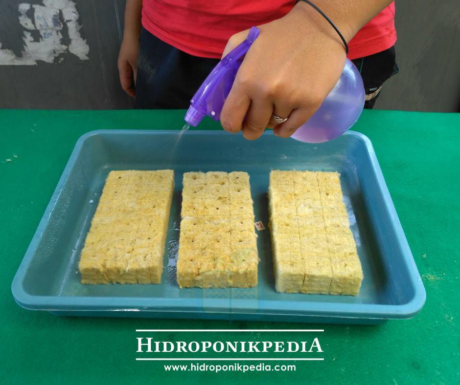 cara-menanam-caisim-hidroponik-05