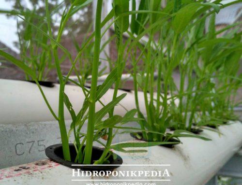 5 Alasan Tanaman Kangkung Harus Selalu Ada di Kebun Anda