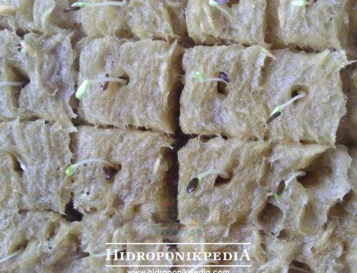 Mengenal Etiolasi Pada Tanaman Hidroponik