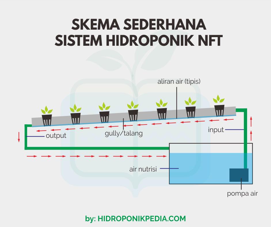 Inilah Kelebihan Dan Kekurangan Sistem Hidroponik Nft