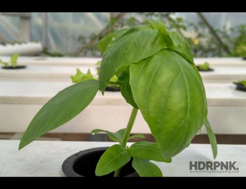 7 Macam Sayuran yang Paling Mudah Ditanam Menggunakan Metode Hidroponik